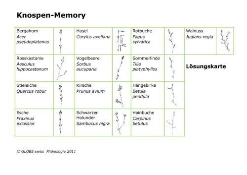 Kennenlernen memory
